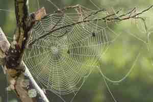 Trucos para alejar las arañas