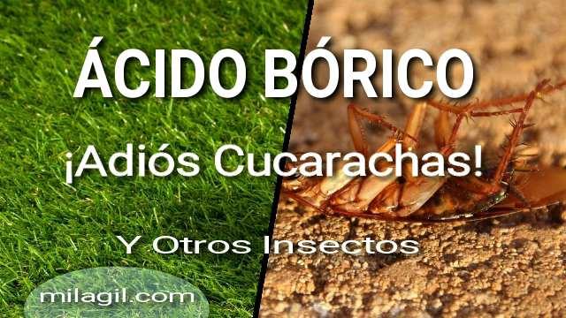 eliminar cucarachas con acido borico