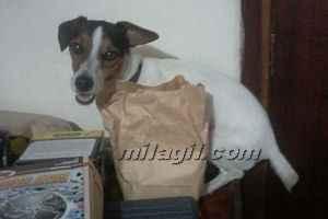 cachorro perro mascota cuidados