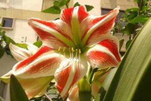 Cultivar nuestro jardín con flores
