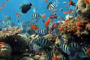limpiar el acuario, mantenimiento de la pecera