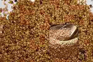 Usos y propiedades del ajonjolí, sésamo o haholi