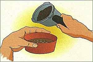 borra de cafe alejar zancudos