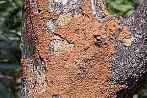 Como prevenir las termitas insectos madera