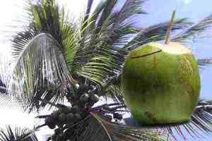 21 Propiedades del agua de coco para la salud