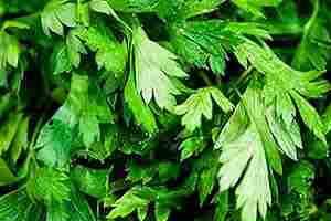 propiedades del perejil salud riñones adelgazar