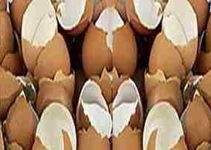 Cáscaras de huevos para la osteoporosis 2