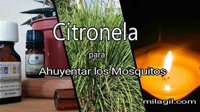 Ahuyentar los Zancudos【Mosquitos】con Citronela
