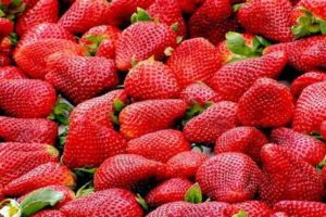 Las fresas sus beneficios para la salud y adelgazar
