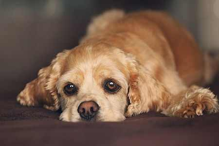 perros mascotas encontrar nombres