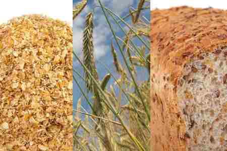 Germen de trigo – propiedades  salud