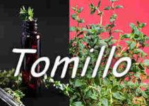 25 Propiedades del 【Tomillo Belleza y Salud】 5