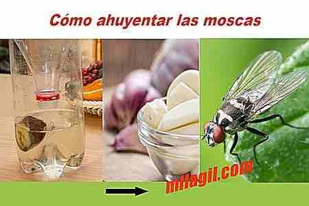 La imagen tiene un atributo ALT vacío; su nombre de archivo es como-ahuyentar-moscas-remedios1.jpg