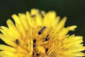 Cómo Alejar Hormigas De Manera Ecológica