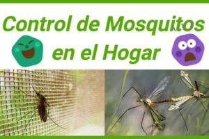 control de mosquitos en el hogar